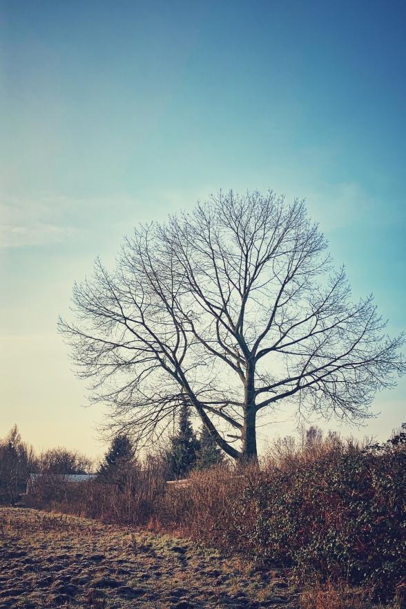 Bäume Trees