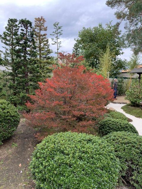 Herbstfarben im Bonsai Garten in Ferch