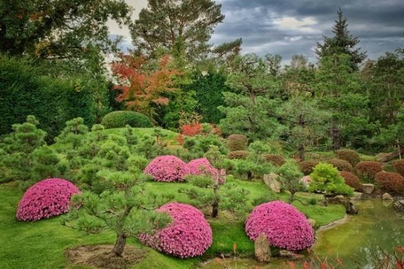 Chrysanthemen Schau