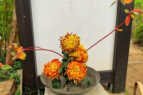 Ikebana mit Chrysanthemen