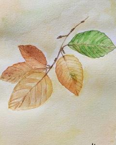 Herbstfarben - Herbstblätter